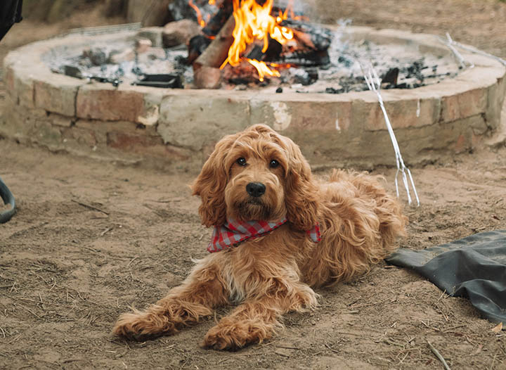 The Greatest Tenting Necessities for Your Canine • Bangla Weblog Professional